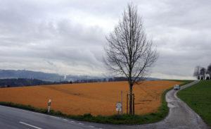 """Landwirtschaft, Unkrautvertilger, """"Round up"""": Ein Feld in Herrenschwanden wude mit dem Unkrautvertilger """"Round up"""" behandelt. Stefan Anderegg"""